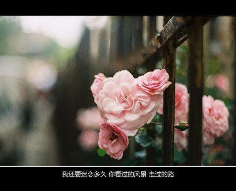 《感悟人生 感恩成长》的句子