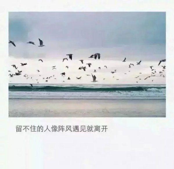 大师关于螃蟹禅语 第一张
